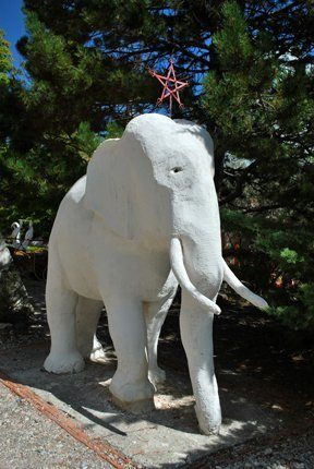 mandarom-galerie-photo-elephant-01